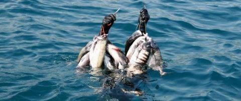 Подводная охота в евпатории